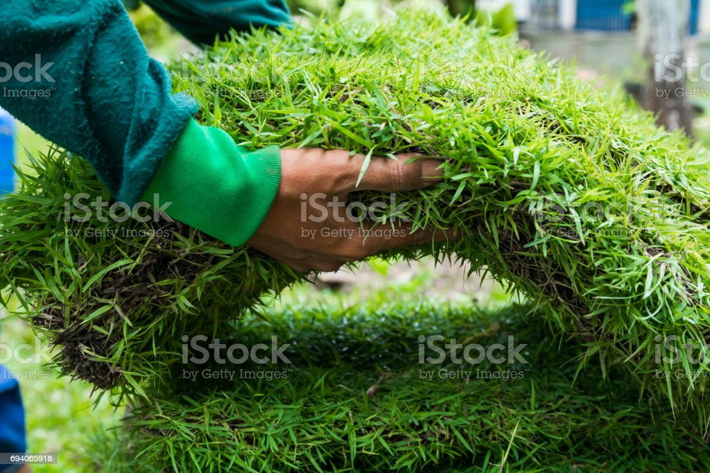 Planting New Grass stock photo