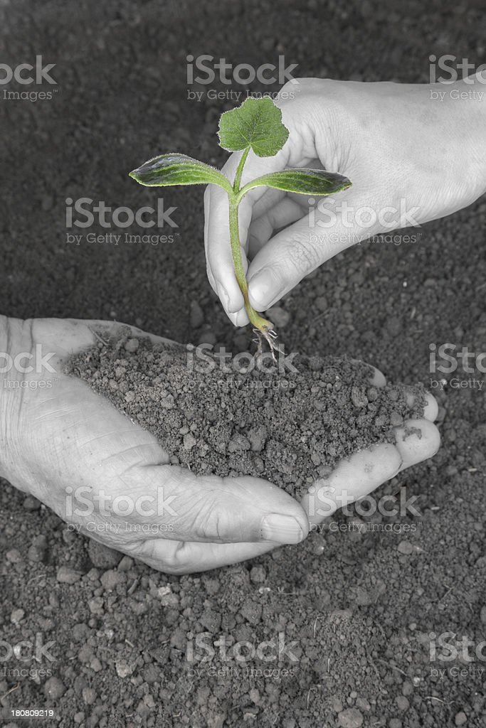 planting new life in couple's hand stock photo