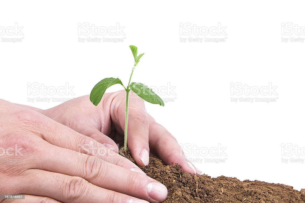 planting new life in spring isolated on white background royalty-free stock photo