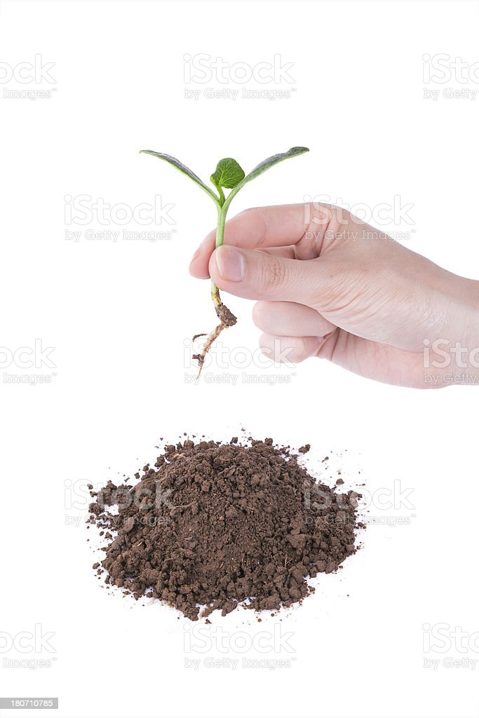 planting new life in spring royalty-free stock photo
