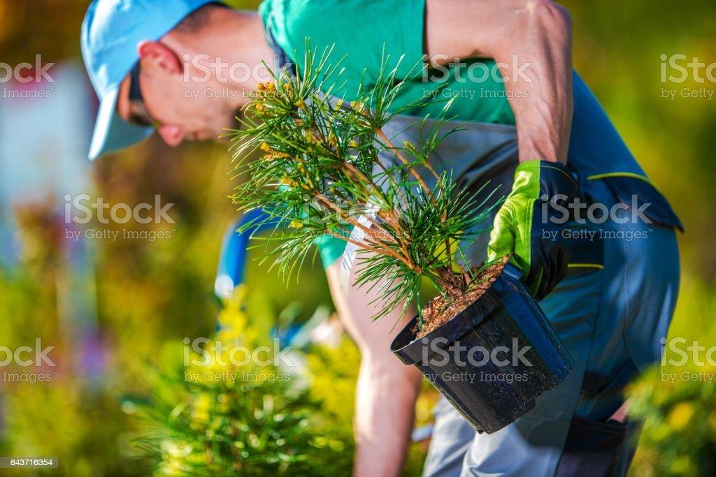 Plantación de nuevos árboles - foto de stock