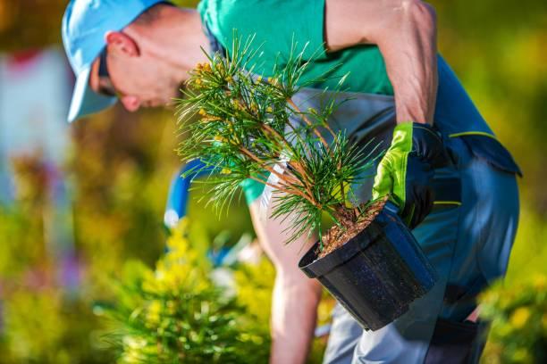 plantación de nuevos árboles - jardinería fotografías e imágenes de stock