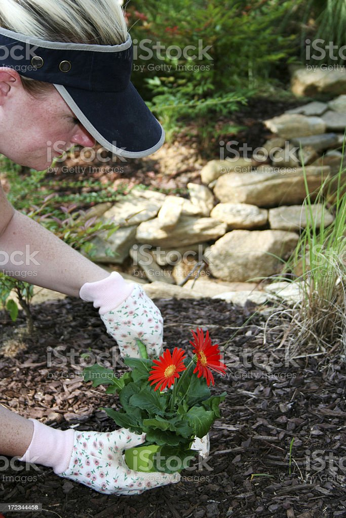 Planting royalty-free stock photo