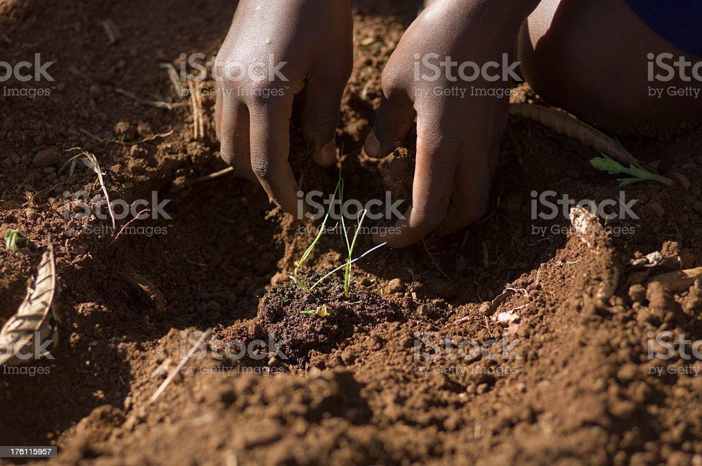 Planting foto