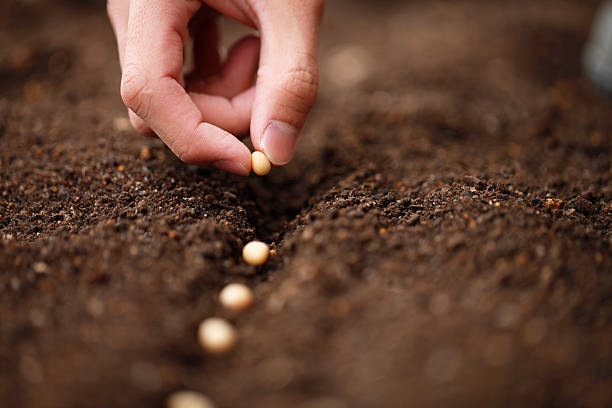planting - seed stock photos and pictures