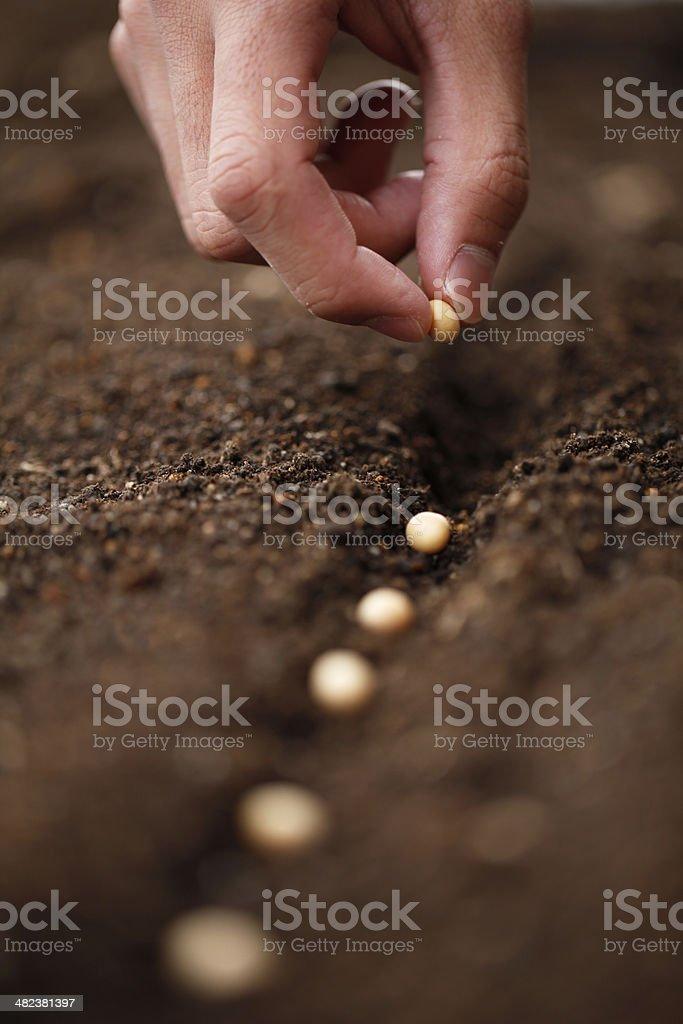Plantação - foto de acervo