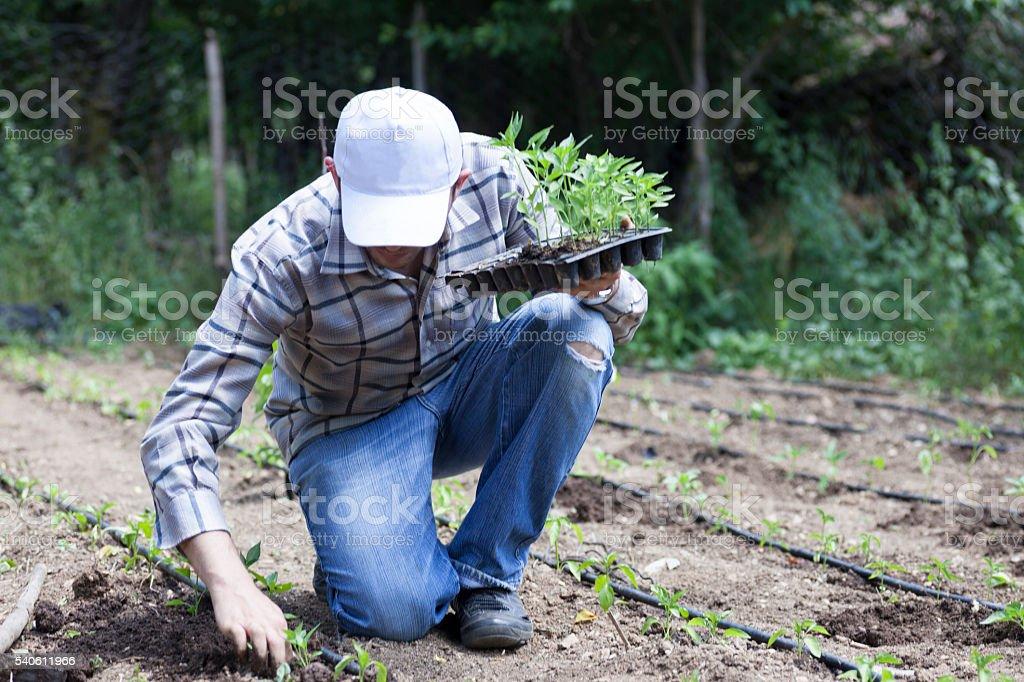 Planting stock photo