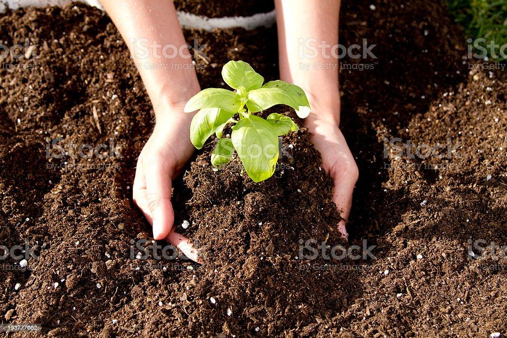 Planting Season stock photo