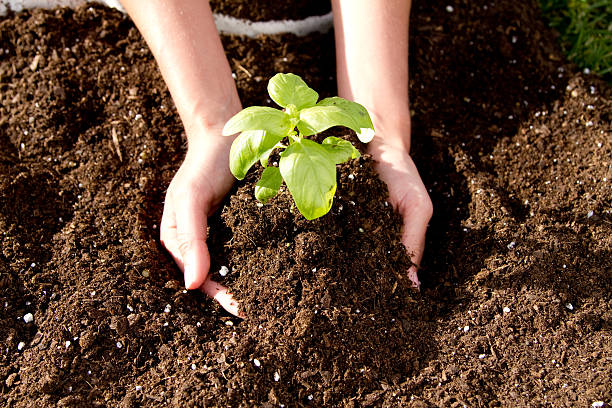 Planting Season stock photo