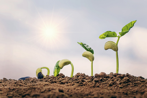 1094263056 istock photo planting seed grow step concept in garden and blue sky with sun background. agriculture idea 1167750414