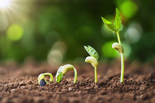 1094263056 istock photo planting seed grow step concept in garden and sunlight. agriculture idea 1167691003
