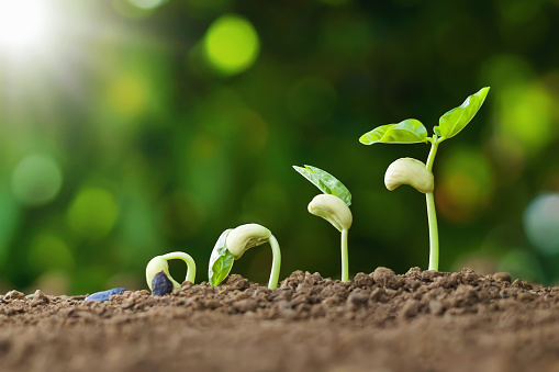 1094263056 istock photo planting seed grow step concept in garden and sunlight. agriculture idea 1167708323
