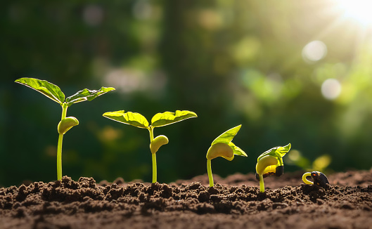 1094263056 istock photo planting seed grow step concept in garden and sunlight. 1213609792