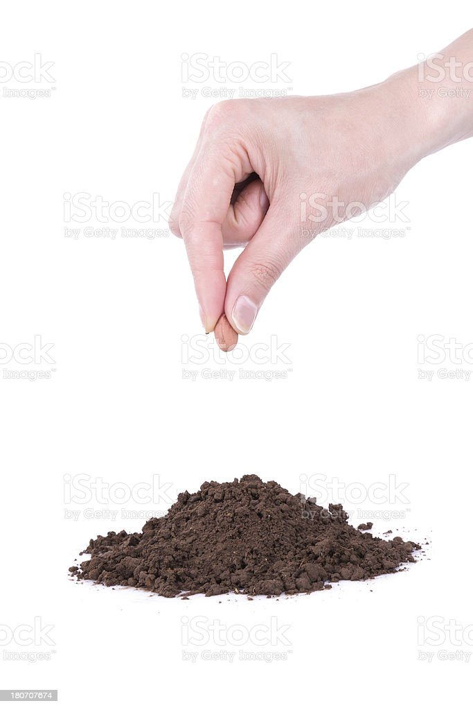 planting seed in spring stock photo