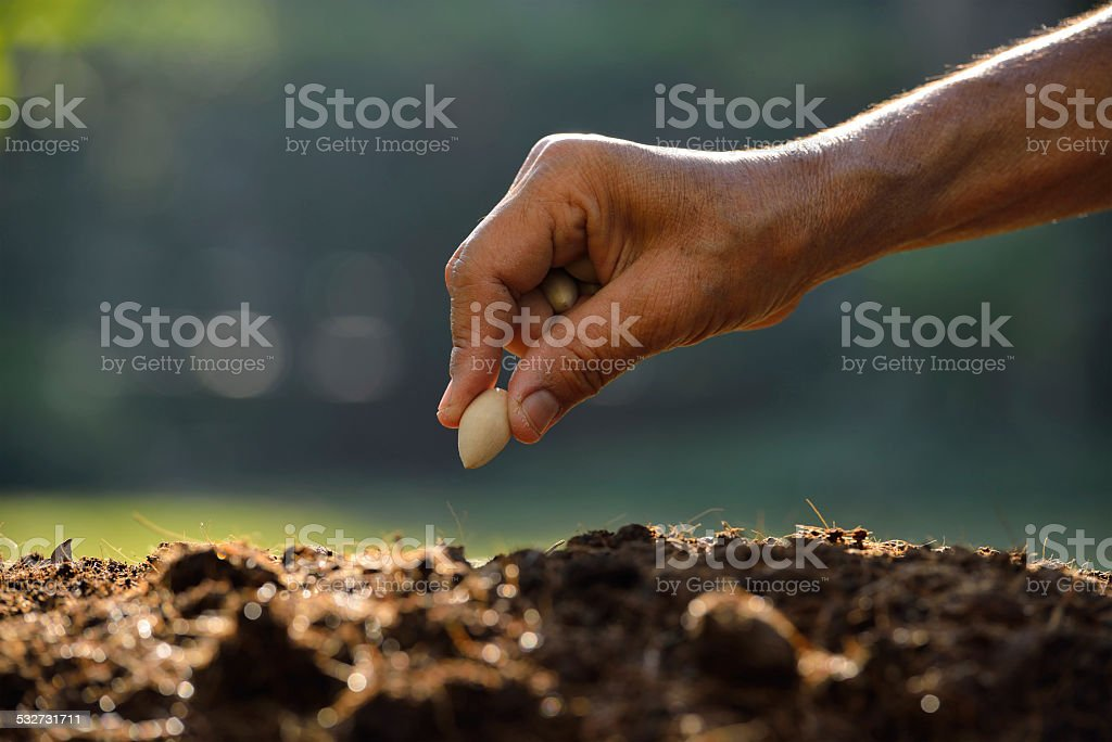 Planting seed stock photo