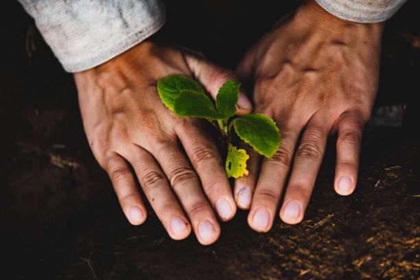 het planten van zaailingen in de bodem. - foto's van hands stockfoto's en -beelden