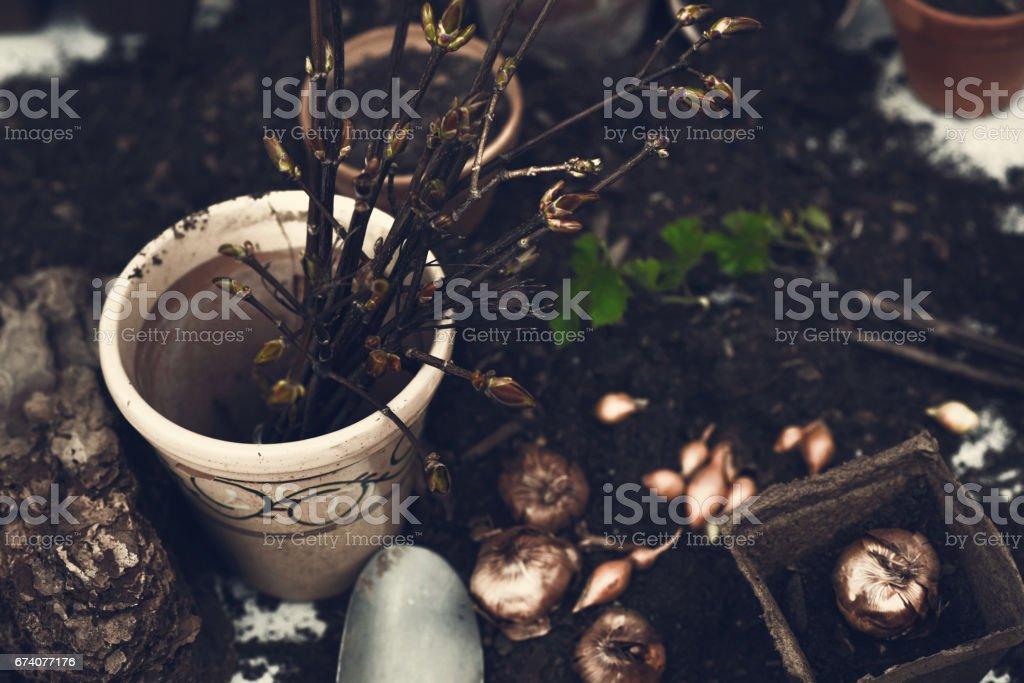 Planting seeds for garden royalty-free stock photo