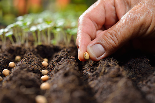 Planting Seeds Stock Photo - Download Image Now