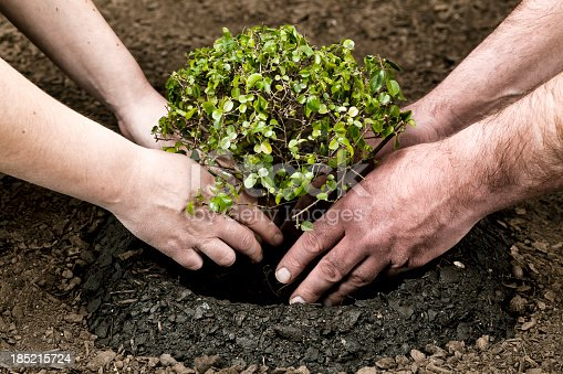 Man and woman planting tree