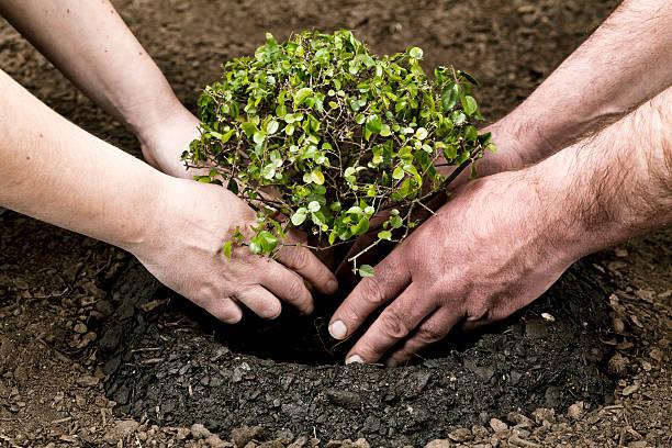 planting small tree - herbebossing stockfoto's en -beelden