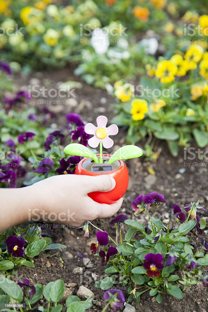 Planting solar powered flower stock photo