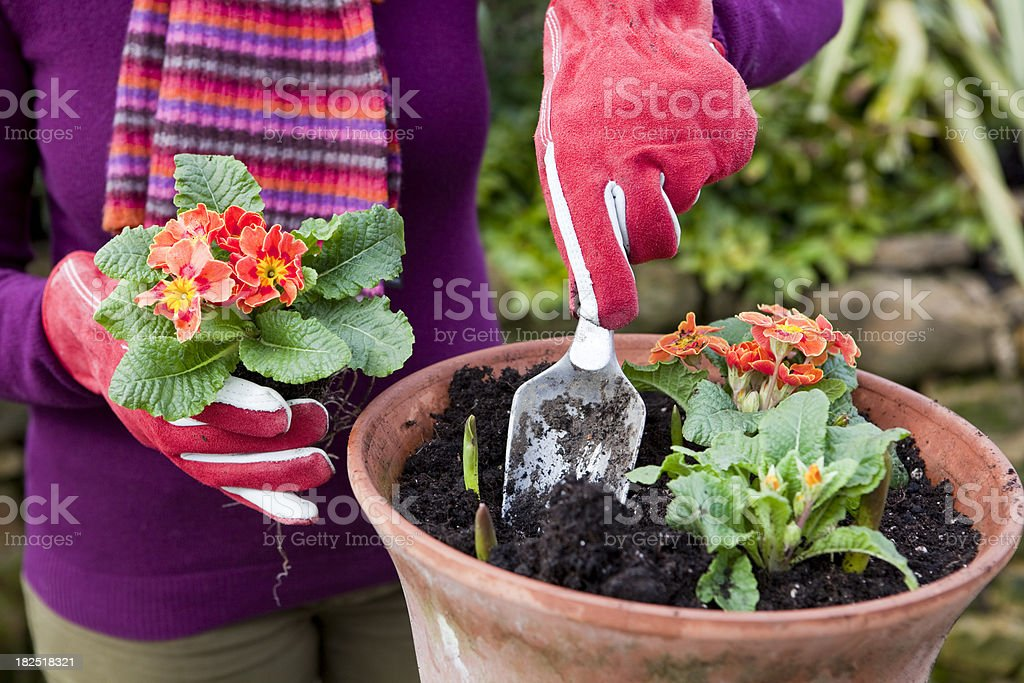 Planting Spring Flowers in Terracotta Pots royalty-free stock photo