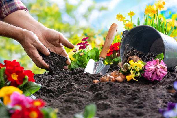 Planting spring flowers in the garden Planting spring flowers in sunny garden plant bulb stock pictures, royalty-free photos & images