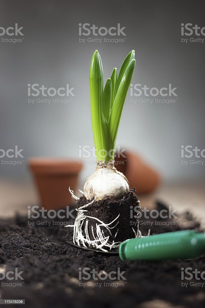 Planting spring flowers royalty-free stock photo