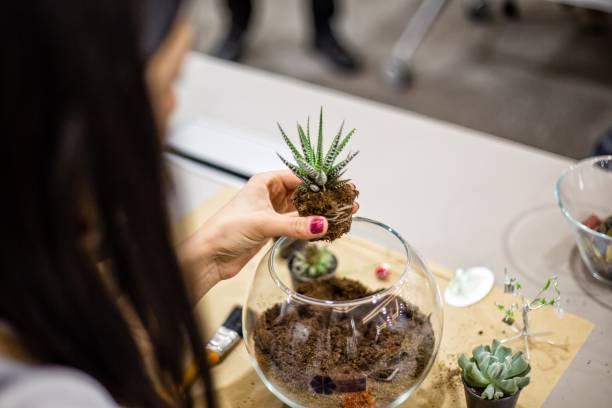 sukkulente pflanzen, in einem terrarium - terrarienpflanzen stock-fotos und bilder
