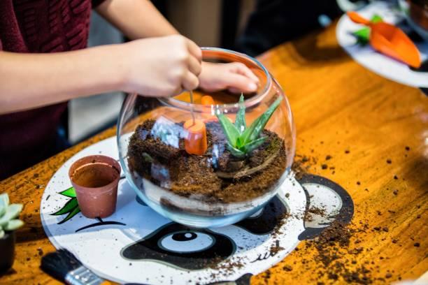 saftige terrarium pflanzen - terrarienpflanzen stock-fotos und bilder