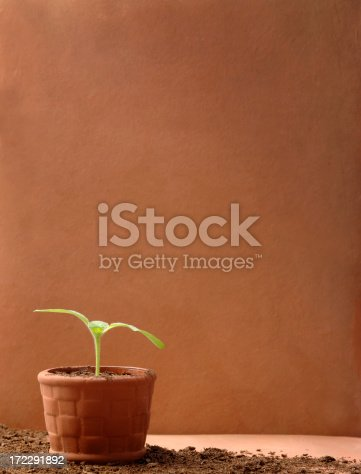 Young Plant Growing in Rich Soil against a Clay Wall.