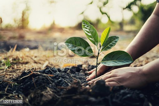 istock planting tree in garden. concept save world green earth 1201112520