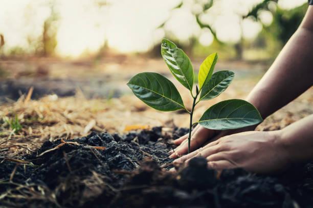 plantando árbol en el jardín. concepto salvar el mundo tierra verde - árbol fotografías e imágenes de stock