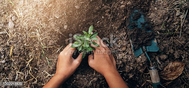 planting tree in garden. concept save world green earth
