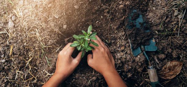 Baum im Garten pflanzen. Konzept retten Welt grüne Erde – Foto