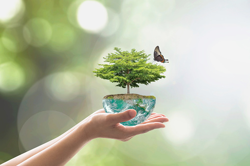 Planting tree on green globe for arbor day, world environment conservation and csr concept: Elements of this image furnished by NASA