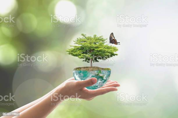 Planting tree on green globe for arbor day world environment and csr picture id961077862?b=1&k=6&m=961077862&s=612x612&h=dx jsz1owflfpvm33suxhadgqecu2yfd zlp606owuw=