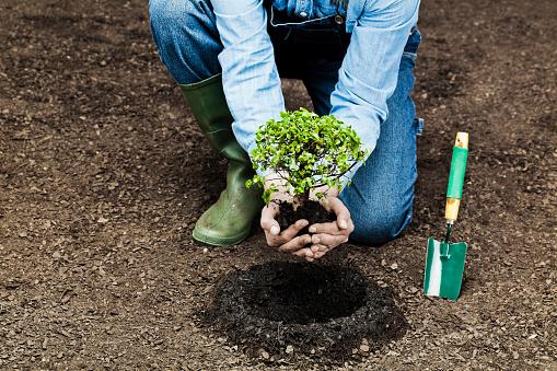 Farmer planting small tree