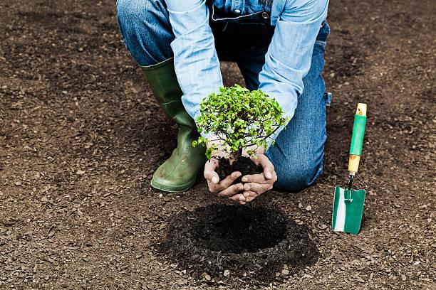 piantare albero - piantare foto e immagini stock