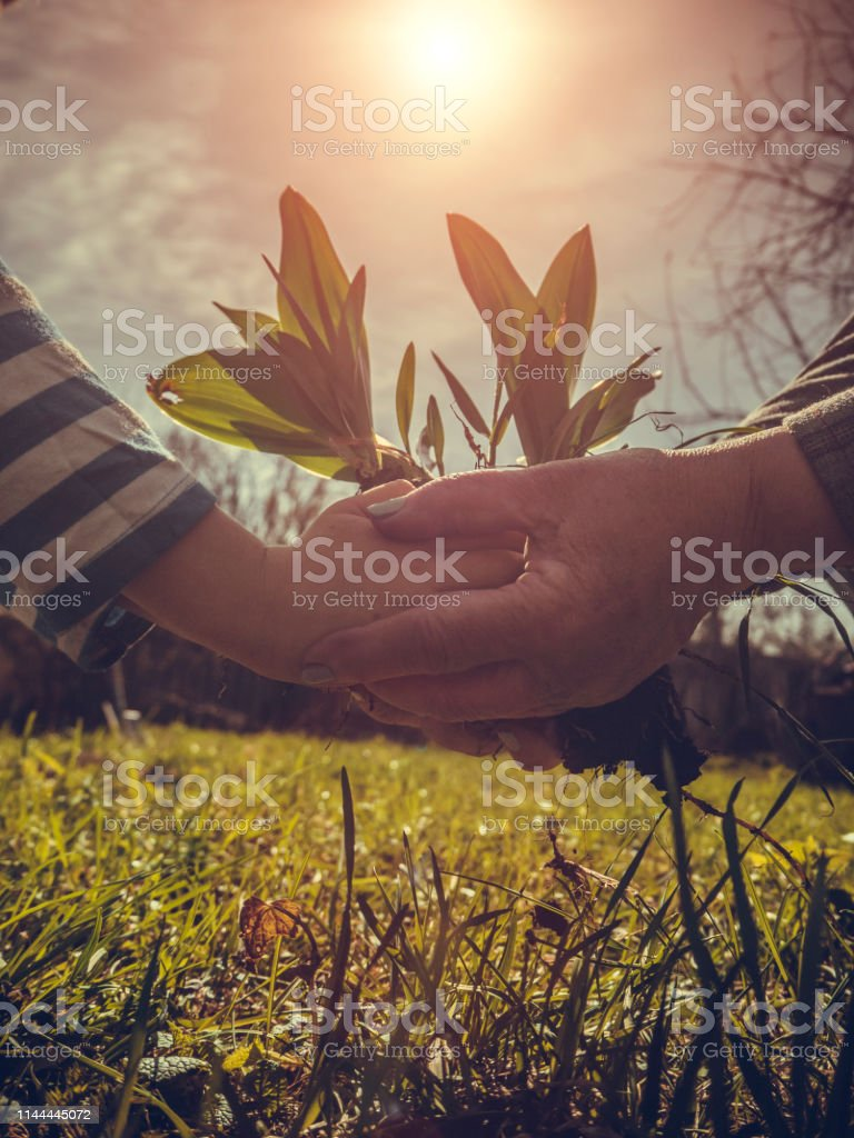 Planting small tree on Arbor day