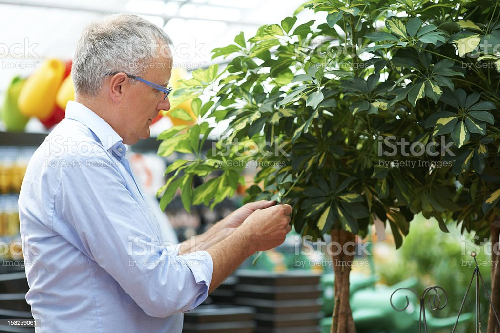 Planting trees ensure a bright future for the earth royalty-free stock photo