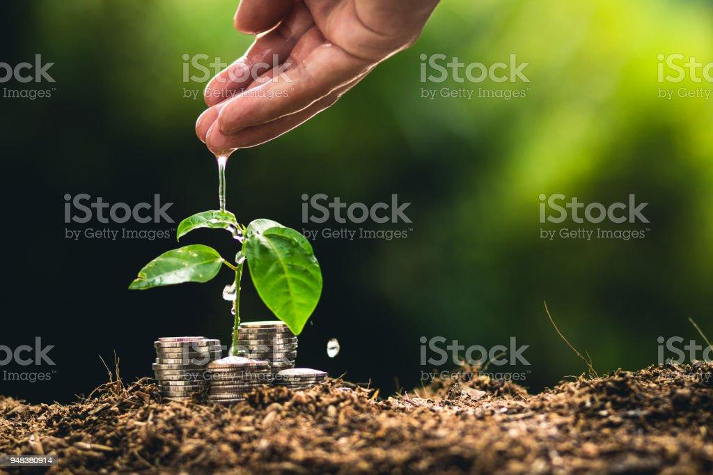 Anpflanzung von Bäumen im Garten wächst, Interesse Münze Jungpflanze finanzieren – Foto
