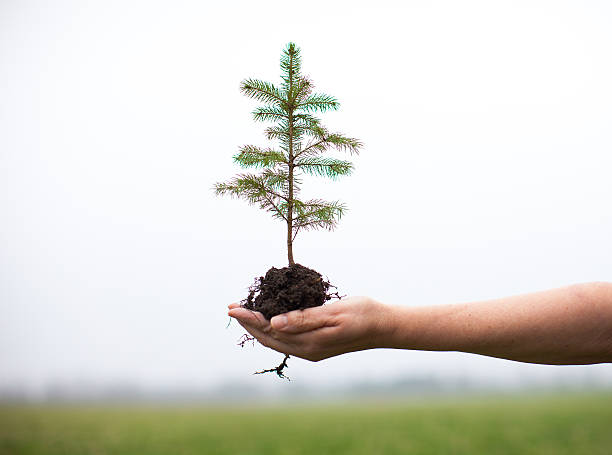 Planting trees with bare hand Picture taken in the countryside in southern Ontario to represent Earth Day.  sapling stock pictures, royalty-free photos & images