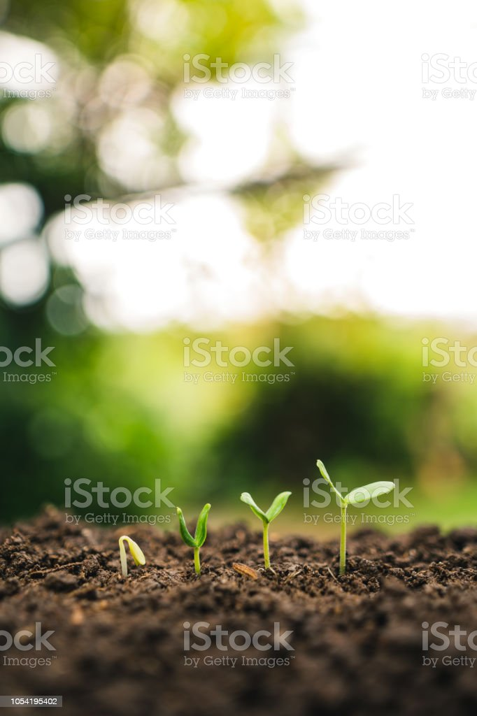 Planting trees.Tree growth,Seedling In nature Green and gold