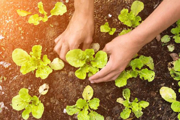 Bepflanzung Gemüsegarten und Farbe Ton-Muster – Foto