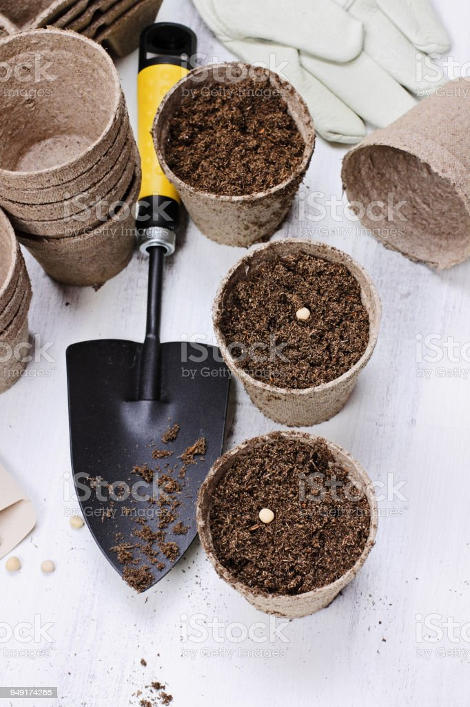Planting Vegetable Seeds stock photo