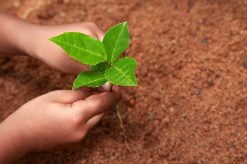 912882270 istock photo Planting young tree by kid hand 626787346
