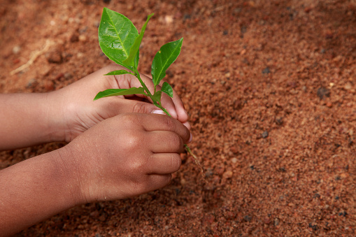 912882270 istock photo Planting young tree by kid hand 626789554