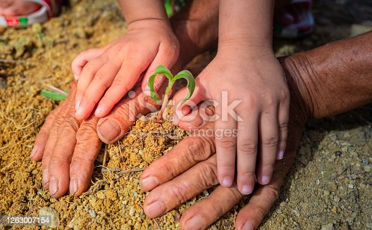 istock planting young tree together, save the world concept 1263007154