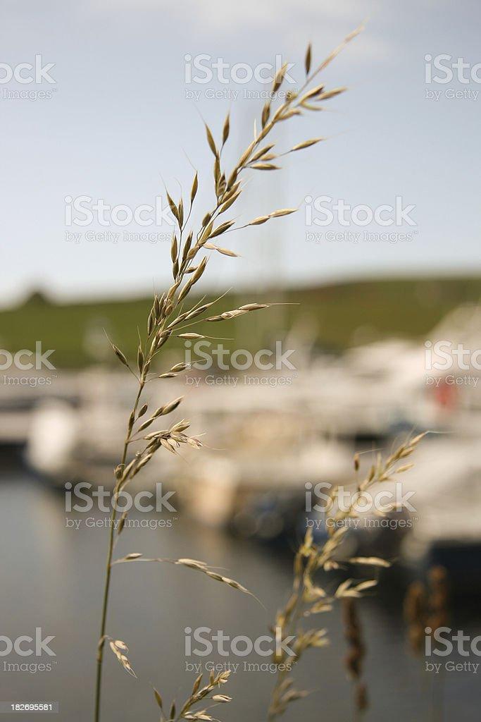 Plantlife royalty-free stock photo